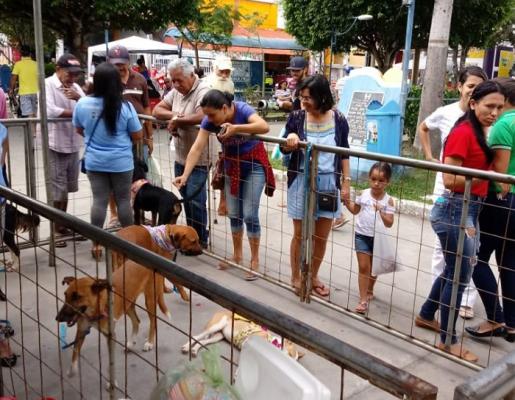 ADOÇÃO: CÃES E GATOS DO ABRIGO DE ANIMAIS GANHAM UM NOVO LAR